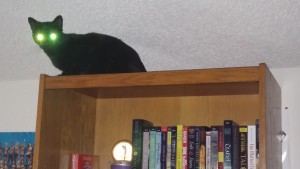 My black cat Shadow sits atop my bookshelf with glowing green eyes.